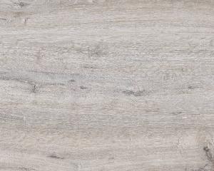 Dub bělený (M 9275)